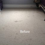 Bedroom-Wall-to-Wall-Carpet-Cleaning-Mountain-View-A
