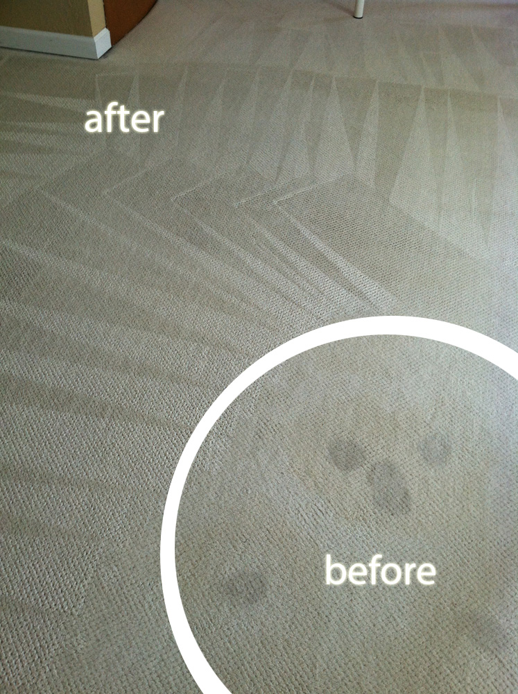 Carpet Cleaning Carpet Cleaning Mountain View 650 239 6030